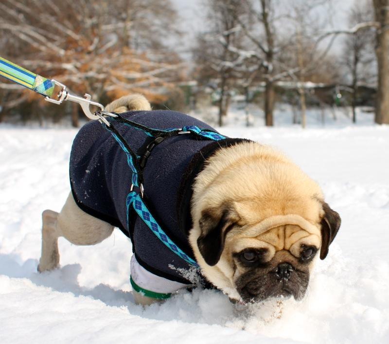 Sid starts snow plowing