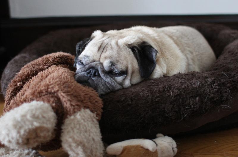 PUG SLOPE » Blog Archive » Pugmatoes