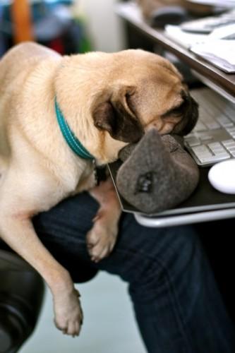 PUG SLOPE » Blog Archive » Pug-Nosed